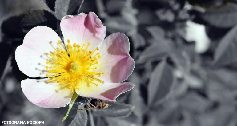 macro-flor