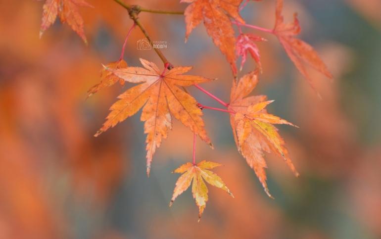 otoño (1).JPG