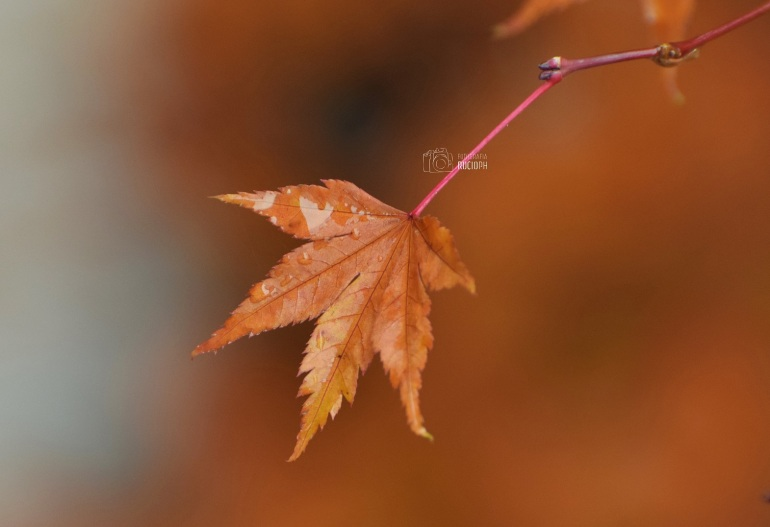 otoño (3).JPG